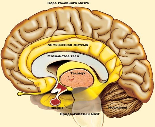 Порно на мозг