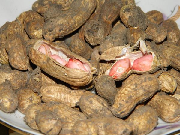 Выращивание арахиса в открытом 56