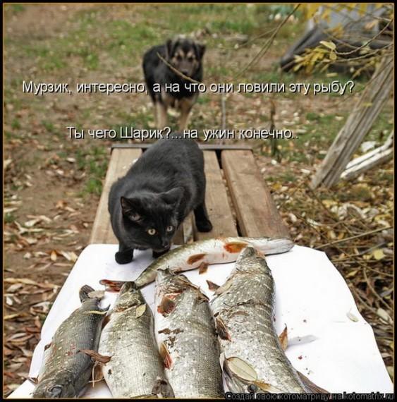 Коты нигеры