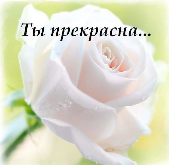 http://content-1.foto.my.mail.ru/mail/superklasssik/_answers/i-5171.jpg