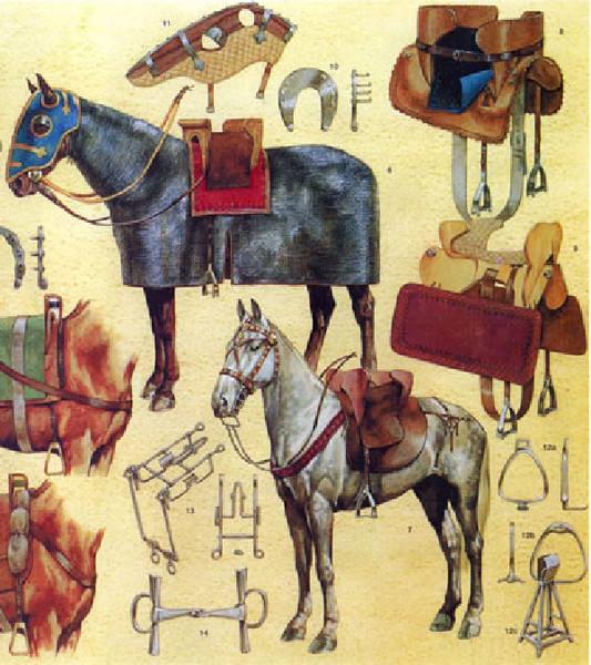 Самые–самые лошади в мире (фото), топ-10 самых лучших лошадей ...   600x533