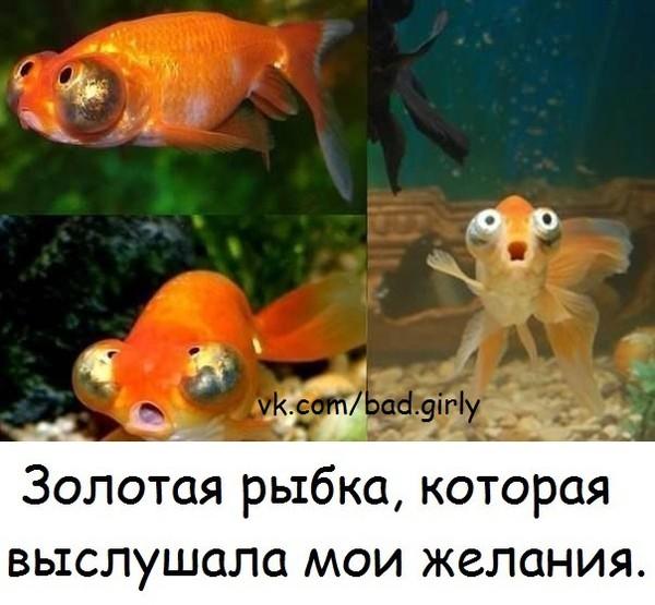Золотая рыбка картинка смешная, пятница