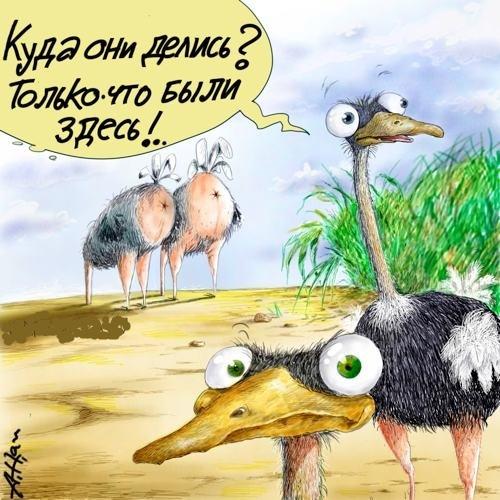 Пресвятой богородицы, рисунок страуса прикольный