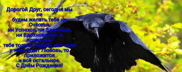 поздравления от вороны обладает удивительными свойствами