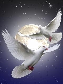 Открытки анимационные, голуби с надписью ислама картинки
